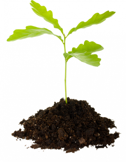 kisspng-seedling-tree-planting-clip-art-arbor-clipart-5adc61be41a0b2.5751286215243923822688